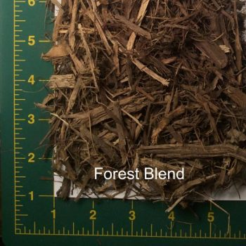 Forest Blend