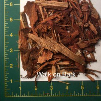 Walk on Bark